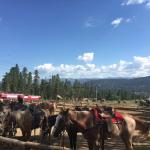 horses lined up before ride