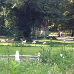 Löwe am Tiergarten Foto