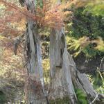 trees on Medina River in fall