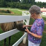 Mom making friends with a pony