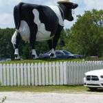 Big Cow out front facing the road is cute