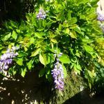 lovely plants