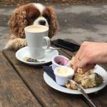 My cavalier approved!!