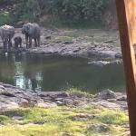 Elephant family at the river.