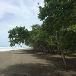 Foto de Playa Matapalo