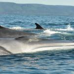 Pleasant Bay Zodiac Tours