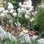 Il giardinetto della baita, pieno di bei fiori e immancabili Edelweiss/stelle alpine