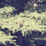 The beautiful nature!