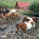 A few of the 120 horses at DWR.