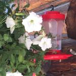Hummingbirds are frequent visitors at DWR.