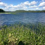 Water Hyacinths at Big Moose Lake