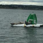 We got very close to the seals today, returning from Inchcolm Island on the Maid of Forth.