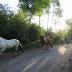 horses running in from pasture