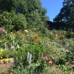 Bountiful flowering gardens