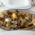 Gold fish and clams