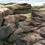 Rocky Shore near Thunder Hole