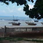 Kizidolphintours day tours
