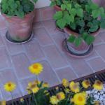 i fiori e le erbe aromatiche