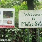 Maleo Saluki