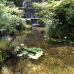 滝のある庭園の池には可憐な睡蓮の花が咲いています