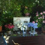 Mimosa Tea Garden