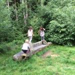 Chambers Farm Woods