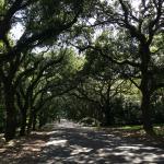 The Live Oak lined street