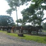 Horses ready to ride