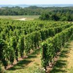 Foto di Chateau Grand Traverse Winery