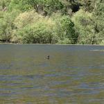 Bartlett Reservoir