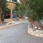 Taverna Kamari
