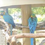 Parrots at Saginaw Zoo
