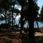 Beach, looking through treesof the park