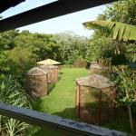 The iguana enclosures