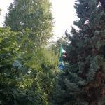 Le bandiere sventolano fra gli alberi