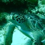 Foto de Dive Experience