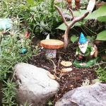 Tiny gnome garden