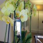orchid in room