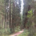Het pad naar het stadje