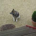 notre visiteur du matin