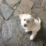 Prince of Caunos Foto