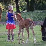 Mother/foal pasture