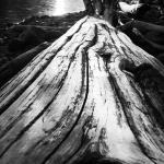 Photo de Lillooet Lake Lodge