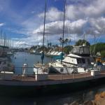 The Tiki Hale Foto