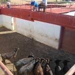 visita a ganaderias entre toros y caballos