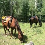 Our horses in the national park at lunch break.