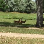 White-tailed deer at 1883 Water Works Fort Collins