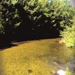 Platte River Pines Resort