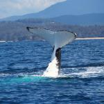 Humpback whale in the bay