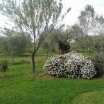 Photo of Agriturismo il Gaggiolo